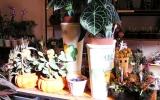 2007-10-22-Inda-04.jpg
