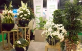 kiállítás Flowerex-07