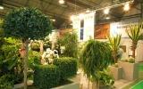 kiállítás Flowerex-08