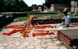 1999-06 Víz - Zene - Virág Fesztivál